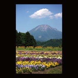 名刺_とっとり花回廊から見た大山